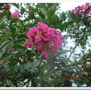 街角に咲く花📷街角ぶらり旅07-11