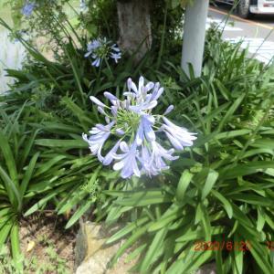 街角に咲く花📷街角ぶらり旅07-12