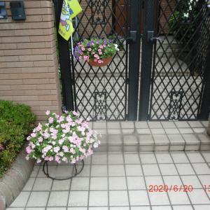 街角に咲く花📷街角ぶらり旅07-13