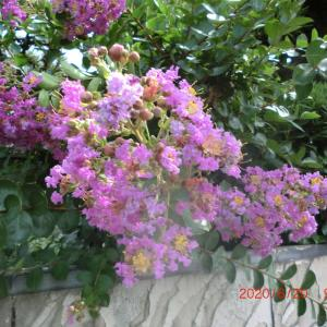 街角に咲く花📷街角ぶらり旅07-14