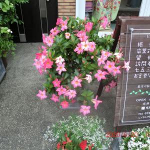 街角に咲く花📷街角ぶらり旅07-16