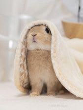 尊い…!聖母みたいなウサギさんの写真に世界中から大反響!!海外からは、絵に描きたいとの声も【気になるNEWS特番】