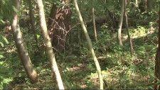 クリ拾い中に クマに襲われ男性けが 「子グマを追い払おうとしたら、親グマが出てきて」宮城・栗原市 【気になるNEWS特番】