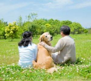 犬の尻尾から気持ちを読み取る……上に巻く時は? 見分け方・役割【気になるNEWS特番】