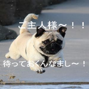 スピードはスピードでも「果〜て〜し〜な〜い〜雲の彼方」ほど違うスピードの話?それとも千鳥の話?