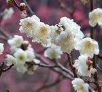 川柳しま専科 2/26(水)~下界など素知らぬ振りでトンビ舞い~