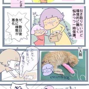 うちの猫とザリガニの紹介
