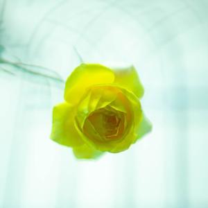 黄色のままのスペクトラ