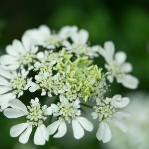 初夏の庭の花