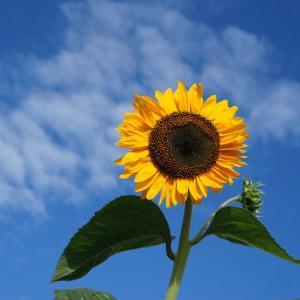半夏生は2つある:二十四節気・七十二候・雑節とは