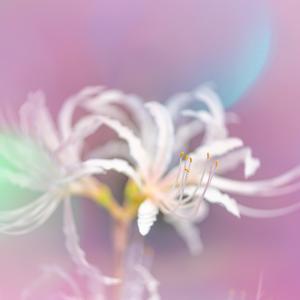 彩られた白い花