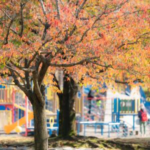 色づいてきた公園