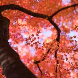 美しく色づく寺家公園
