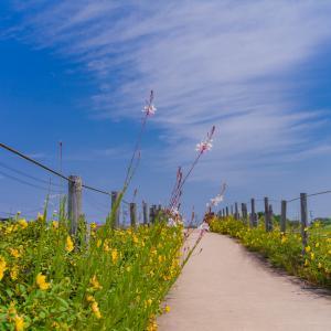ヒペリカムの咲く小径:呉羽山公園