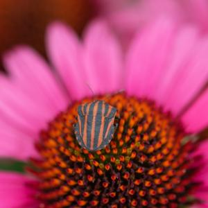 花にそっくり