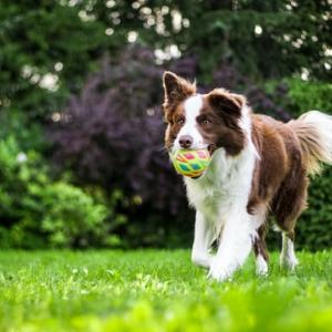お台場で犬のおもちゃを物色!