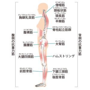 姿勢はバランスが大切!抗重力筋トレーニングで重力に負けない体づくり