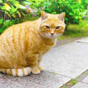 若々しさは姿勢から!猫背と内巻き肩の原因と治し方
