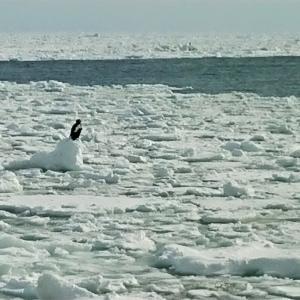 網走流氷観光砕氷船 おーろら【北海道】
