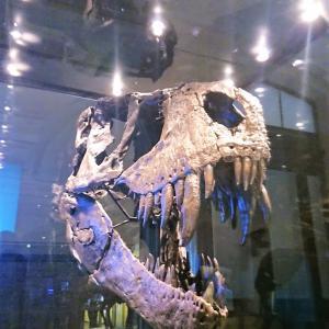ベルリン自然史博物館『Museum für Naturkunde』ドイツ
