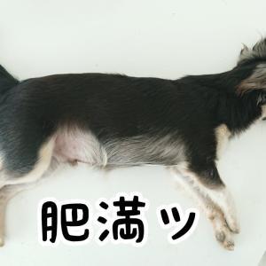 肥満犬、誕生してしまう