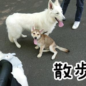 子犬さん、社会化をする
