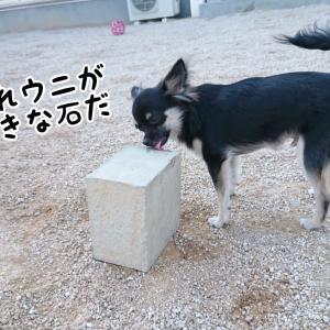 解き放たれた犬