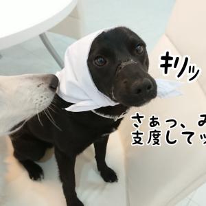 給食センターで勤務する犬