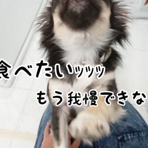 手作りオシャレ犬飯入門