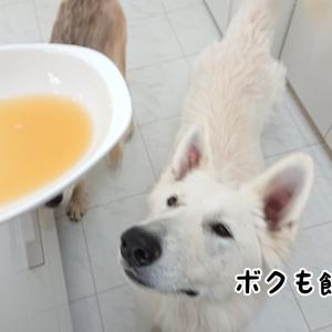 犬、りんごジュースの会を行う