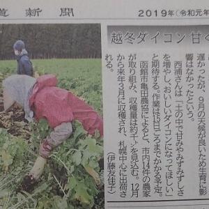 道南爺様日記 大根埋め込み始まる 新聞から 20191109