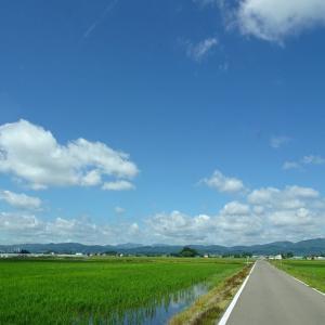 道南爺様日記 真夏の日差し 千代田神社 鎮守の森20210719