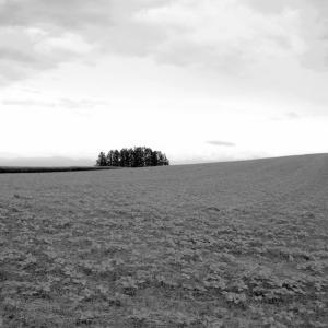 ヒマワリの丘