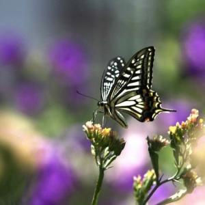 7/28 「花と昆虫」その2 (その1~その3)