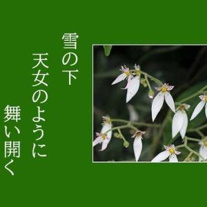 7 / 3 「 俳句5句 」