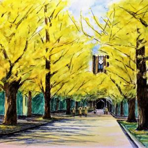水彩画 「安田講堂の銀杏並木」