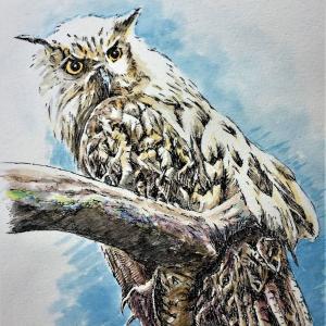 水彩画 「フクロウ」