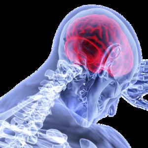 スポーツ外傷(前十字靭帯断裂、足関節捻挫など)にも神経系のリハビリが大切【選手・指導者向け】