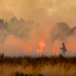オーストラリア森林火災への募金方法!!