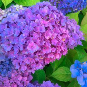 花言葉が「移り気」「浮気」・・何の花かわかりますか?その答えは・・