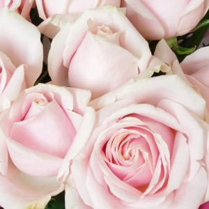 薄ピンクのバラの花びら
