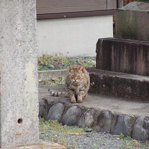 矢柄神社の猫