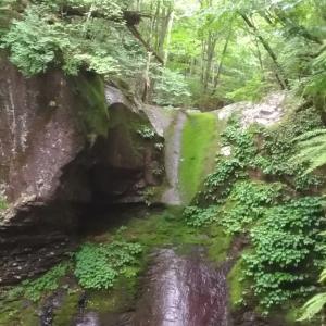 本日(6月22日)のおしらじの滝