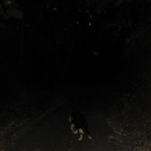 暗闇から覗く青空や変な表情の小僧など(動画有)