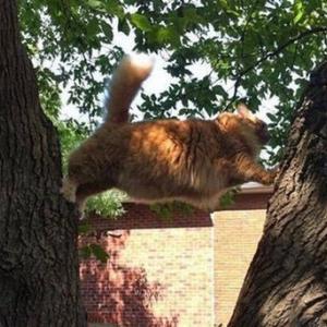 色々やらかしちゃってる猫写真集(超絶珍しいコラボ動画有)