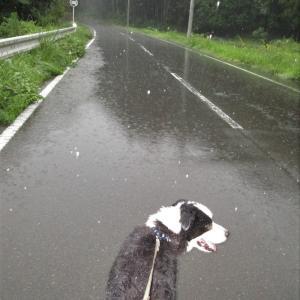雨の日のガードレールは危険が危ないよ(動画有)