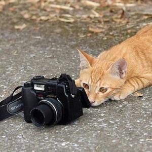 人と動物 カメラめぐって立場逆転(驚く猫の動画有)
