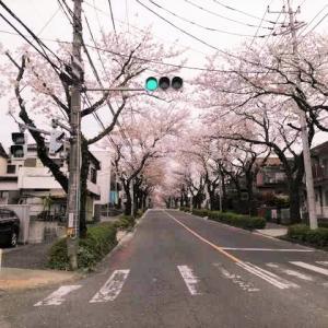 そうだ、桜見に行こう。と思い立って