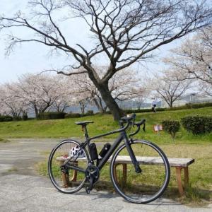 桜のお陰で100KM/週を継続中