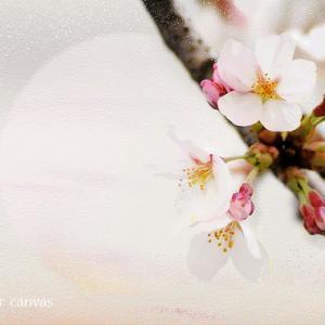 雪の花守 -春の章- 5